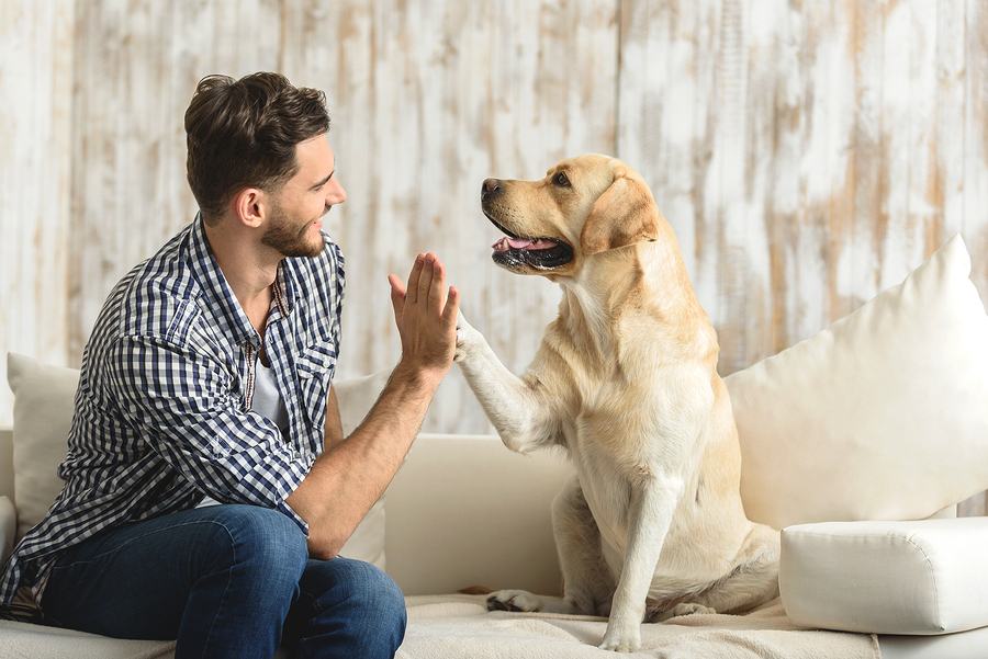 Tips to Start Your Own Pet-Sitting Business